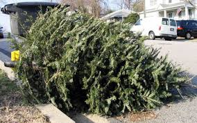 Christmas tree disposal