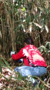 A Wilson High School student helps clear bamboo.