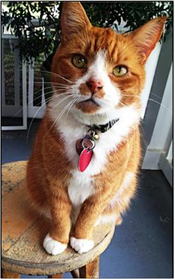 Lost Cat Caramel